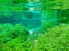 クロレラの原料である藻